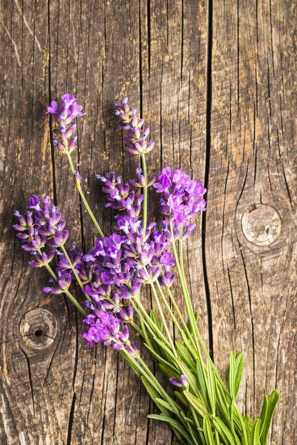 Цветки лаванды стоковая фотография rf