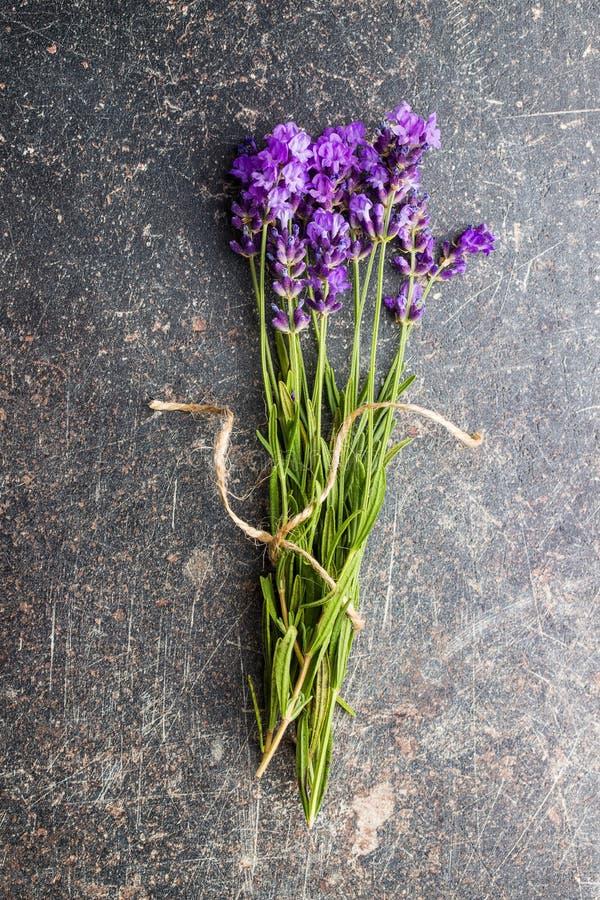 Цветки лаванды стоковые фото
