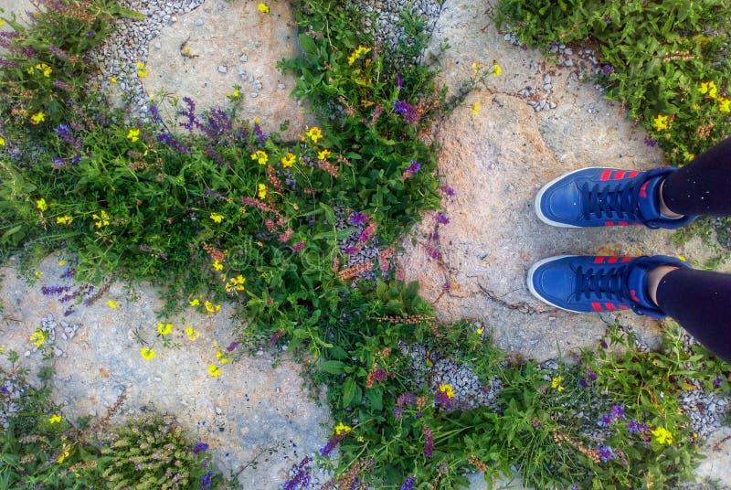 Цветки лета и длинные прогулки стоковое изображение