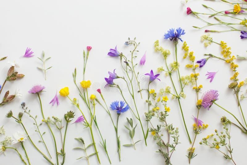 Цветки лета на предпосылке белой бумаги стоковые фотографии rf