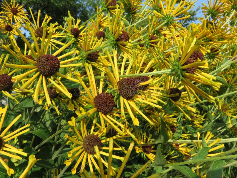 Цветки лета от августа стоковые фото