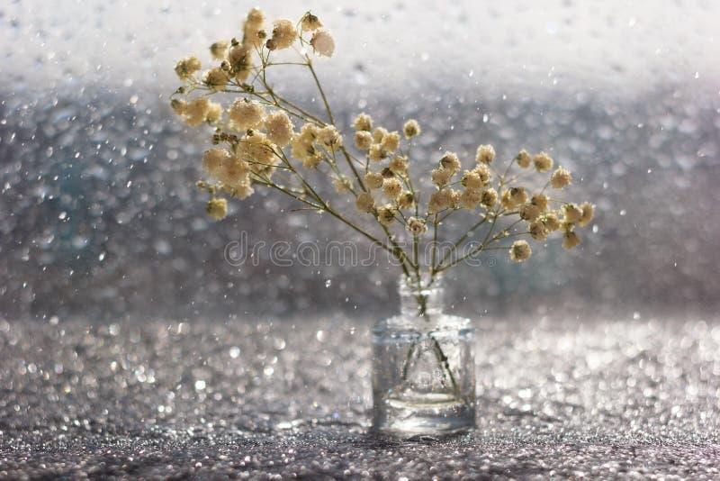 Цветки макроса белые с запачканным bokeh в натюрморте стоковое изображение rf