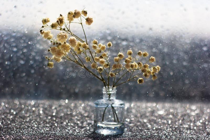 Цветки макроса белые с запачканным bokeh в натюрморте стоковое изображение