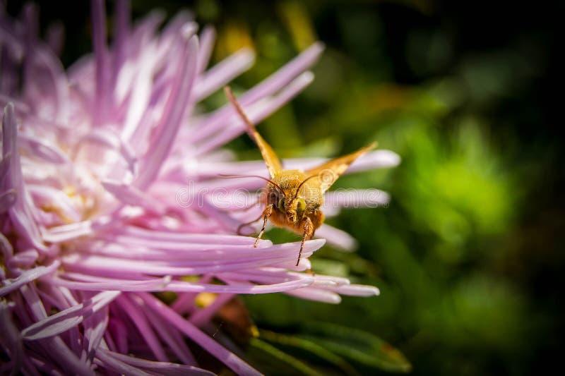 Цветки макроса на летний день в солнечной погоде стоковые фото
