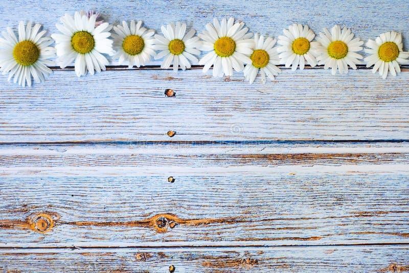 Цветки маргаритки на сини покрасили деревянную предпосылку, космос экземпляра стоковая фотография