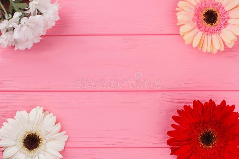 Цветки маргаритки стоцвета и gerbera на древесине стоковая фотография