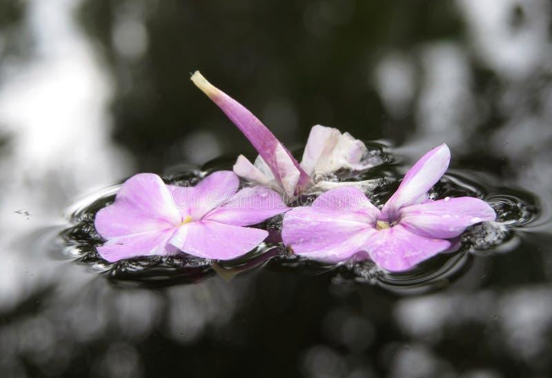 Цветки на воде стоковая фотография