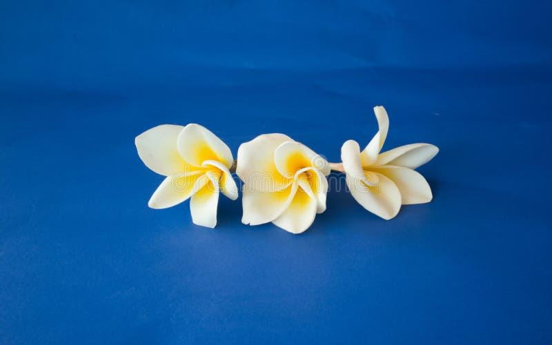 Цветки на голубой предпосылке стоковое фото