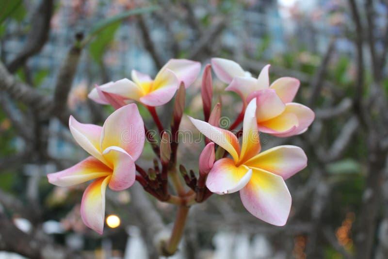 Цветки на деревьях в саде стоковое изображение rf