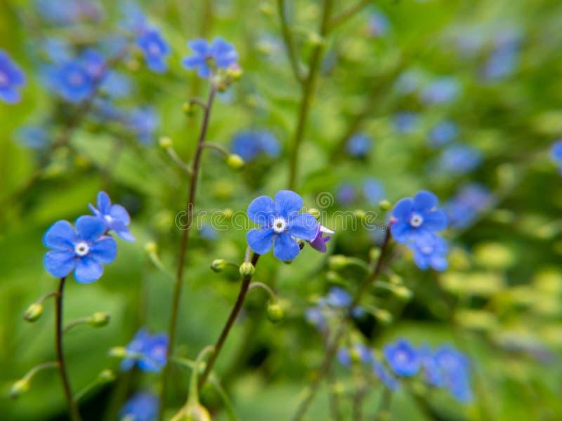 Цветки на зеленой предпосылке голубого неба стоковые изображения rf