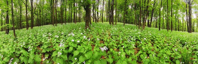 Цветки на зеленом лесе - панораме 360 стоковые изображения rf