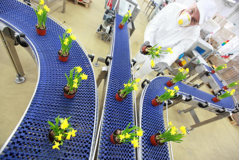 Цветки на конвейерной ленте, производственной линии, современном деле стоковая фотография