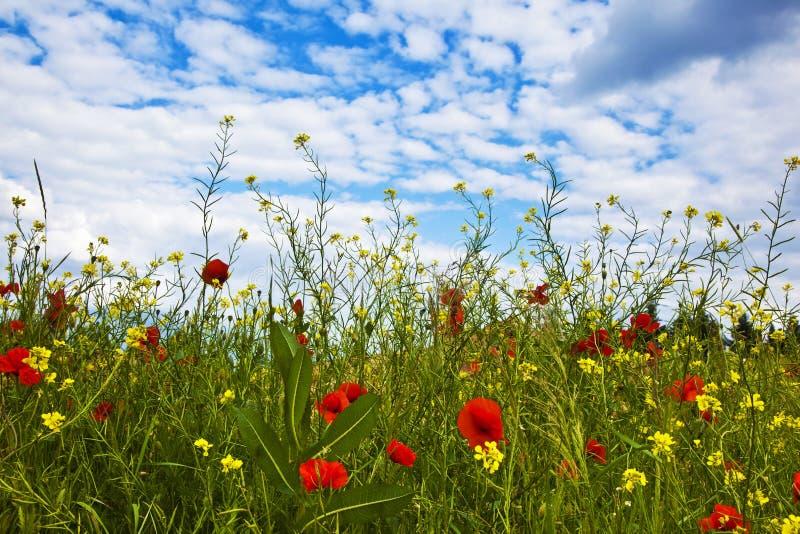 Download Цветки на крае луга стоковое изображение. изображение насчитывающей деталь - 40587377