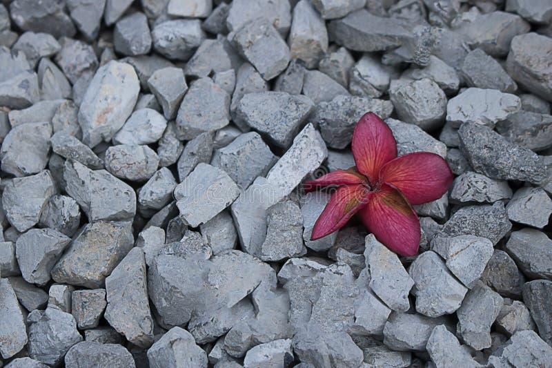 цветки на красном сером цвете камешка стоковые фотографии rf