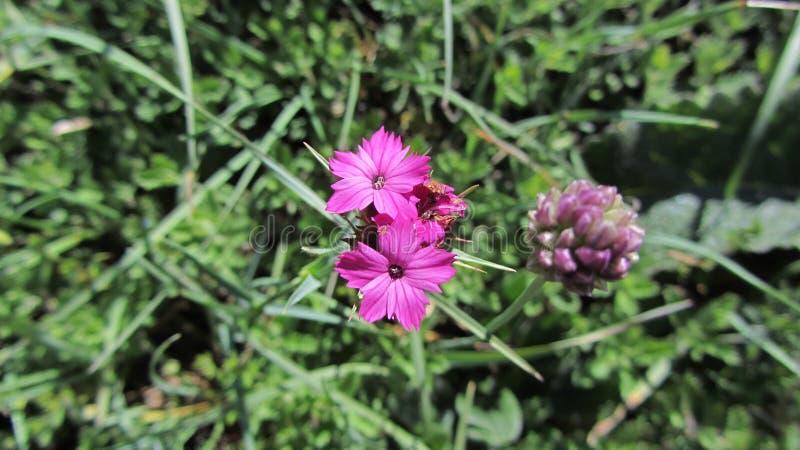 Цветки на наклонах гор стоковая фотография rf