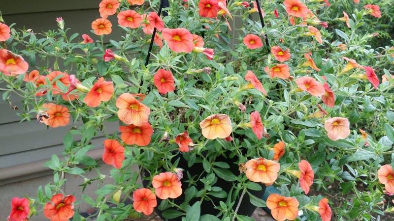 Цветки на дни стоковое изображение rf