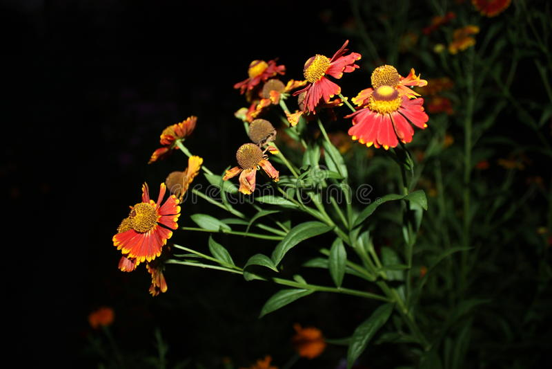 Цветки на ноче стоковые фотографии rf