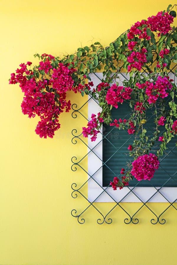 Цветки на окне стоковое изображение rf