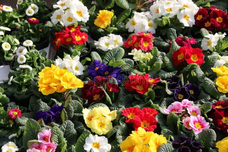 Цветки на стойле рынка стоковое изображение rf