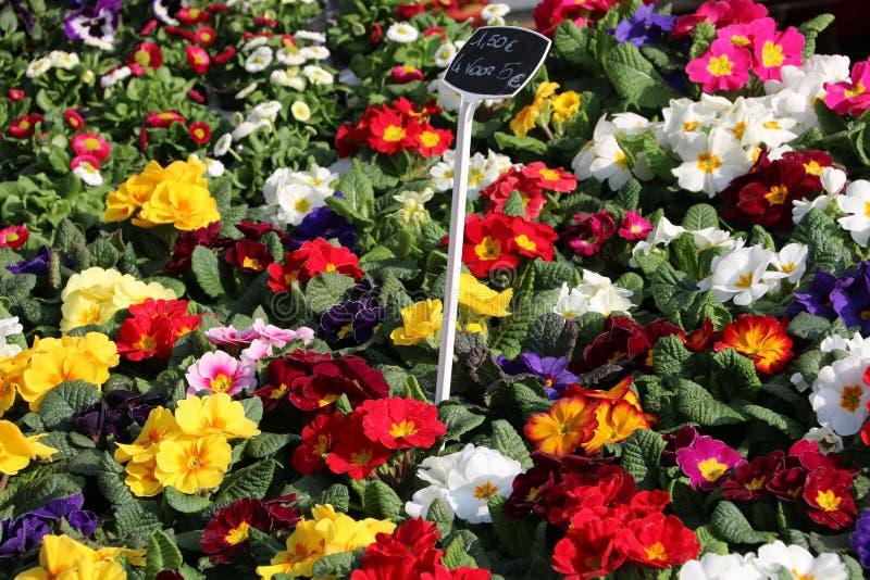 Цветки на стойле рынка стоковое фото