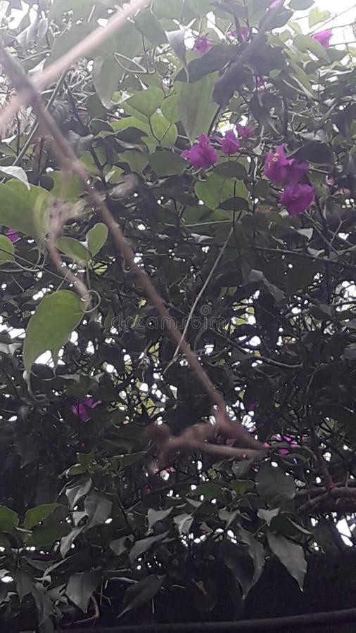 Цветки на стороне прогулки стоковая фотография
