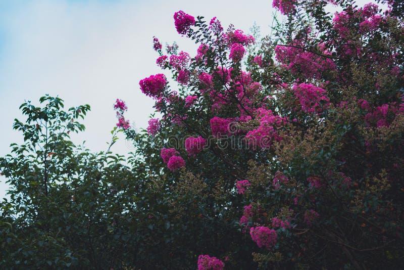 Цветки на LUSHAN стоковое фото rf