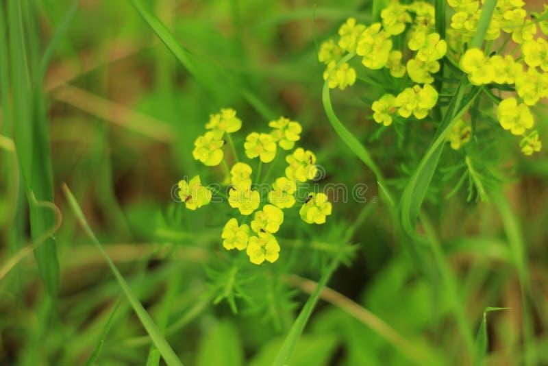 цветки немногая желтый цвет стоковая фотография
