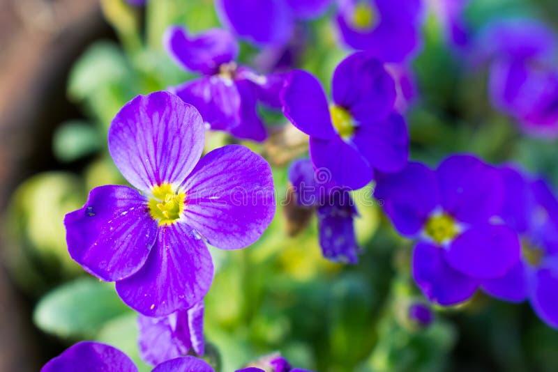 цветки немногая лиловое стоковое изображение