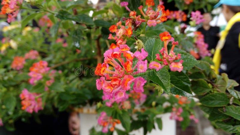 цветки немногая стоковое фото rf