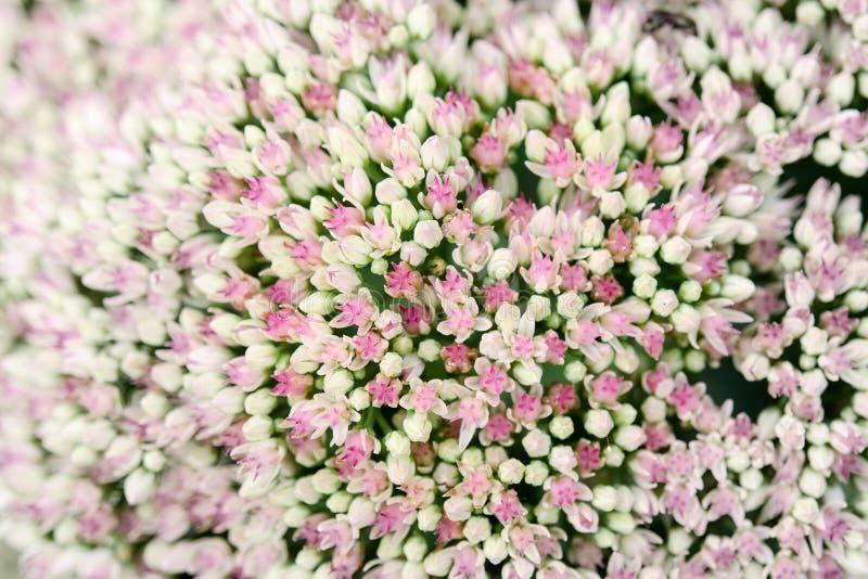 цветки немногая стоковая фотография rf