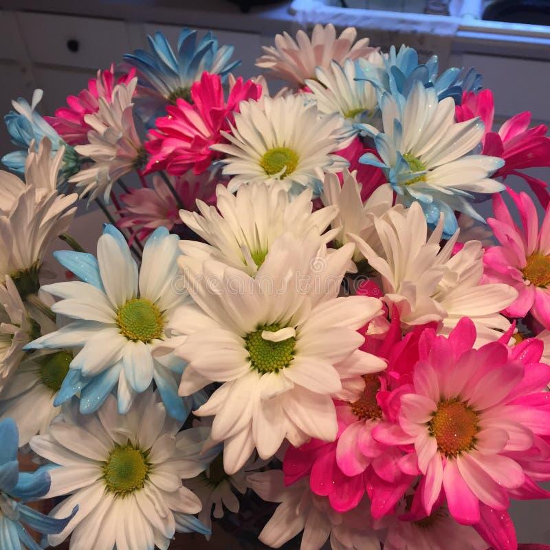 Цветки дня рождения стоковые фото