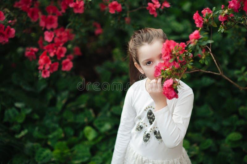 цветки обнюхивать девушки азалий цветя азалии в парке стоковые фото