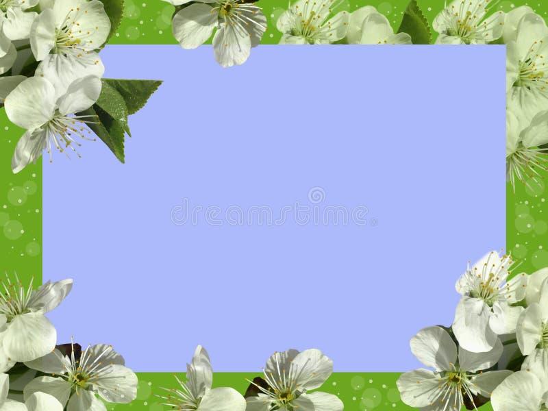 цветки обрамляют белизну стоковые фото