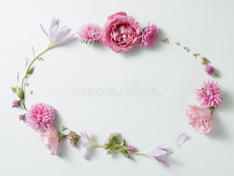 цветки обрамляют в белой предпосылке стоковые фотографии rf