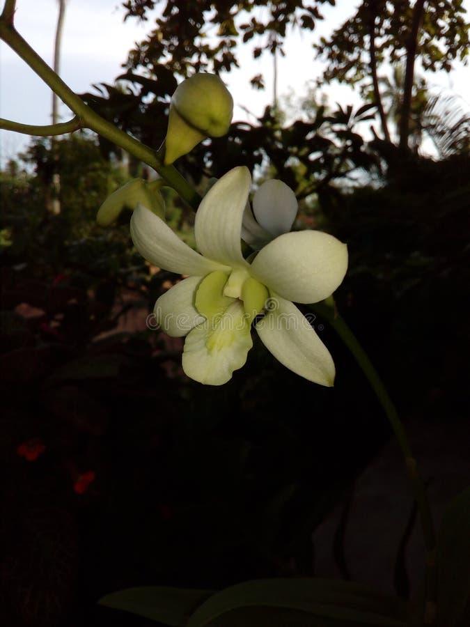 Цветки орхидей стоковые фото