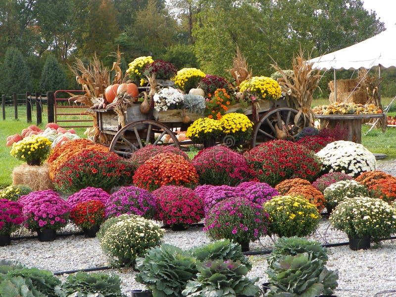 Цветки осени стоковое фото