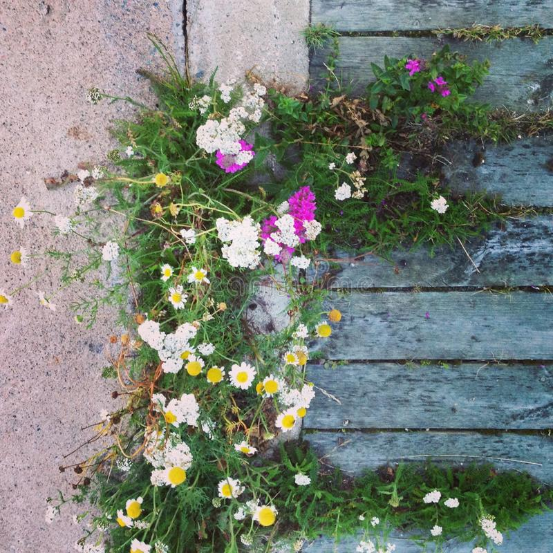 Цветки острова Балтийского моря стоковая фотография