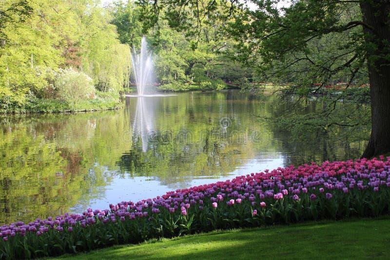 Цветки парка keukenhof стоковая фотография rf