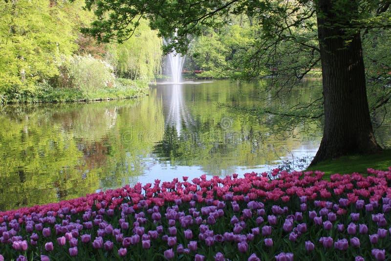 Цветки парка keukenhof стоковые фото