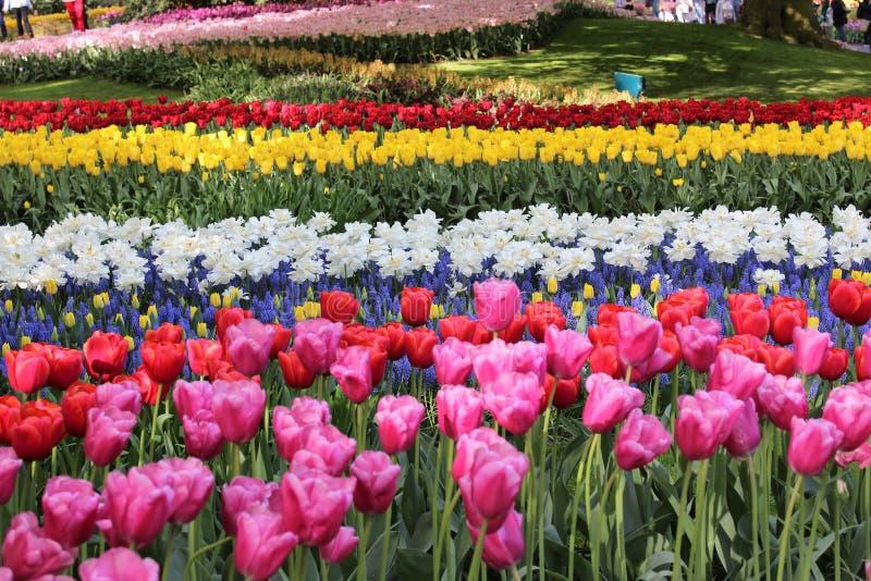 Цветки парка keukenhof стоковое изображение rf