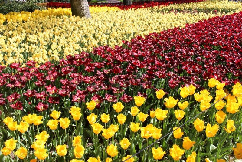 Цветки парка keukenhof стоковые фотографии rf