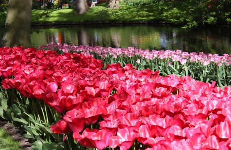 Цветки парка keukenhof стоковая фотография
