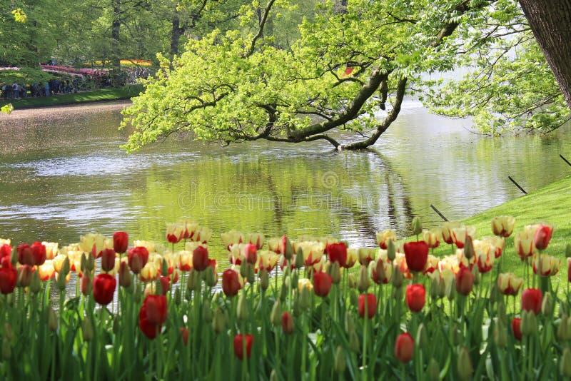 Цветки парка keukenhof стоковое изображение