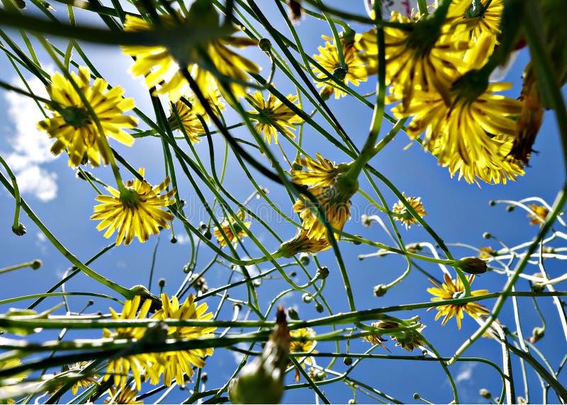 Цветки пахнут сладостными для души, поэтому они душевнобольно хороши стоковые изображения rf