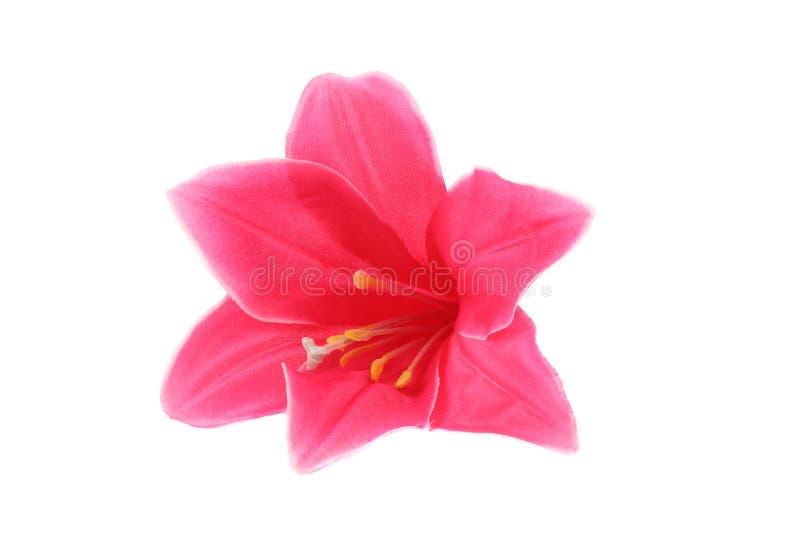 Цветки персика розовые стоковые изображения rf