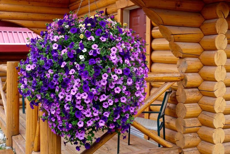 Цветки петуньи и деревянные кабины каникул стоковые изображения rf