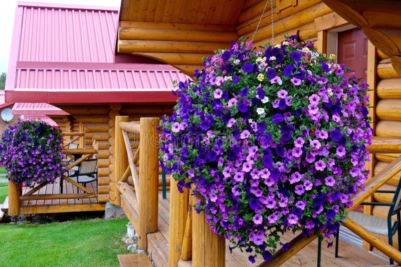 Цветки петуньи и деревянные кабины каникул стоковая фотография