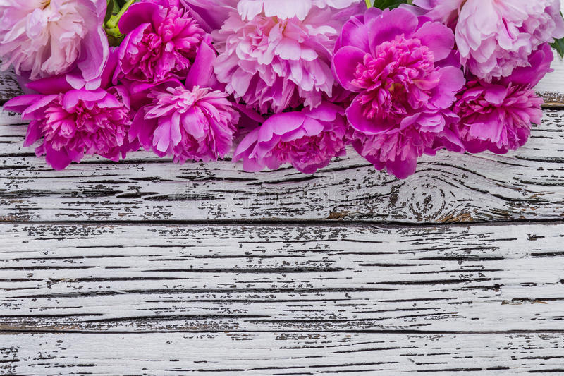 Цветки 01 пиона стоковая фотография rf
