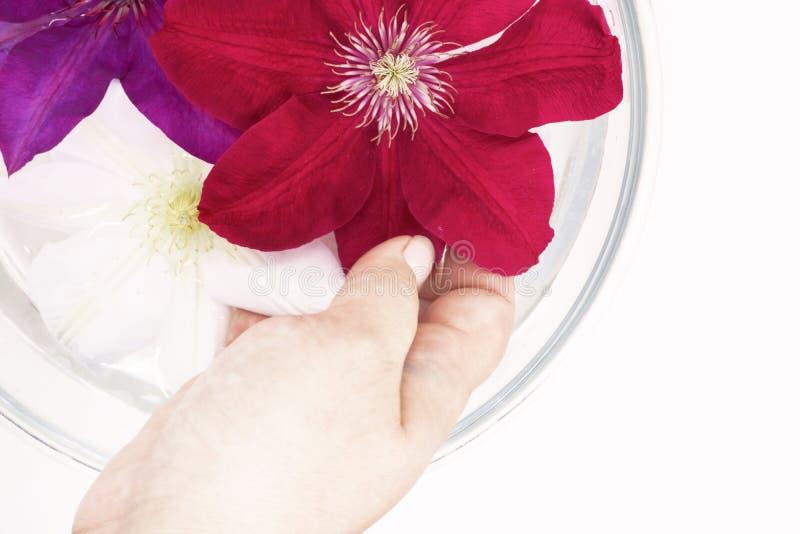 Цветки плавают в воду в стеклоизделии, женская рука держат цветки, процедуры по спа стоковое изображение rf