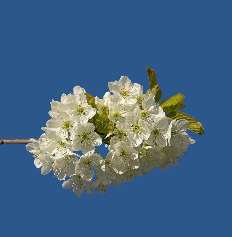 Цветки плодоовощ стоковое фото